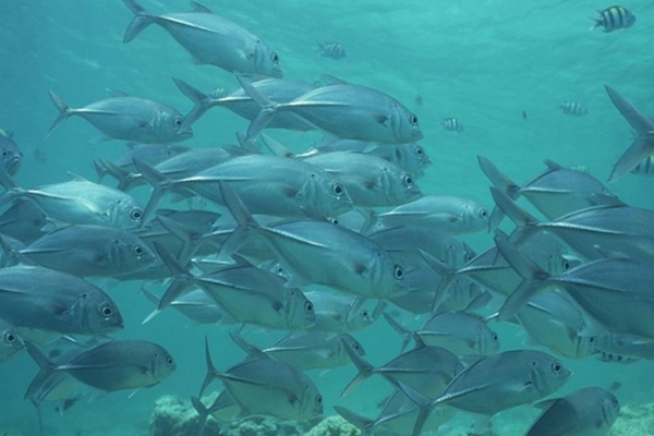 GOLI Course: Ocean Acidification Impacts on Fisheries; Image credit: NOAA