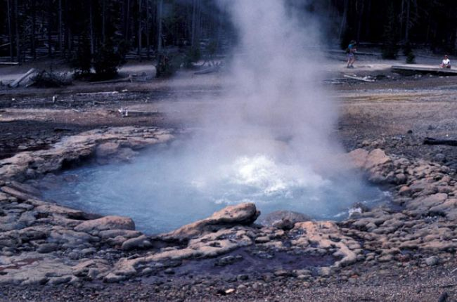 Geyser in West Basin of Yellowstone National Park. Image Copyright © Bruce Molnia, Terra Photographics
