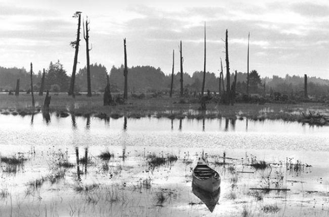 "This ""ghost forest"" near the mouth of the Copalis River, Washington, was killed by saltwater tides after an earthquake in 1700 caused the land to subside. Image Credit: USGS/Photo by Brian Atwater"