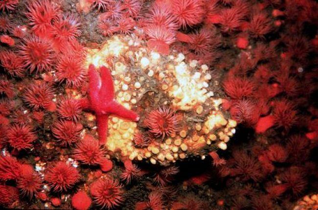 Starfish and anemones off Massachusetts coast