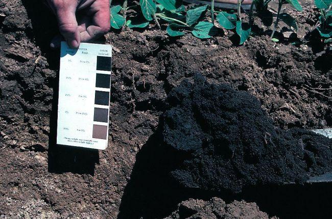 Measuring soil color.
