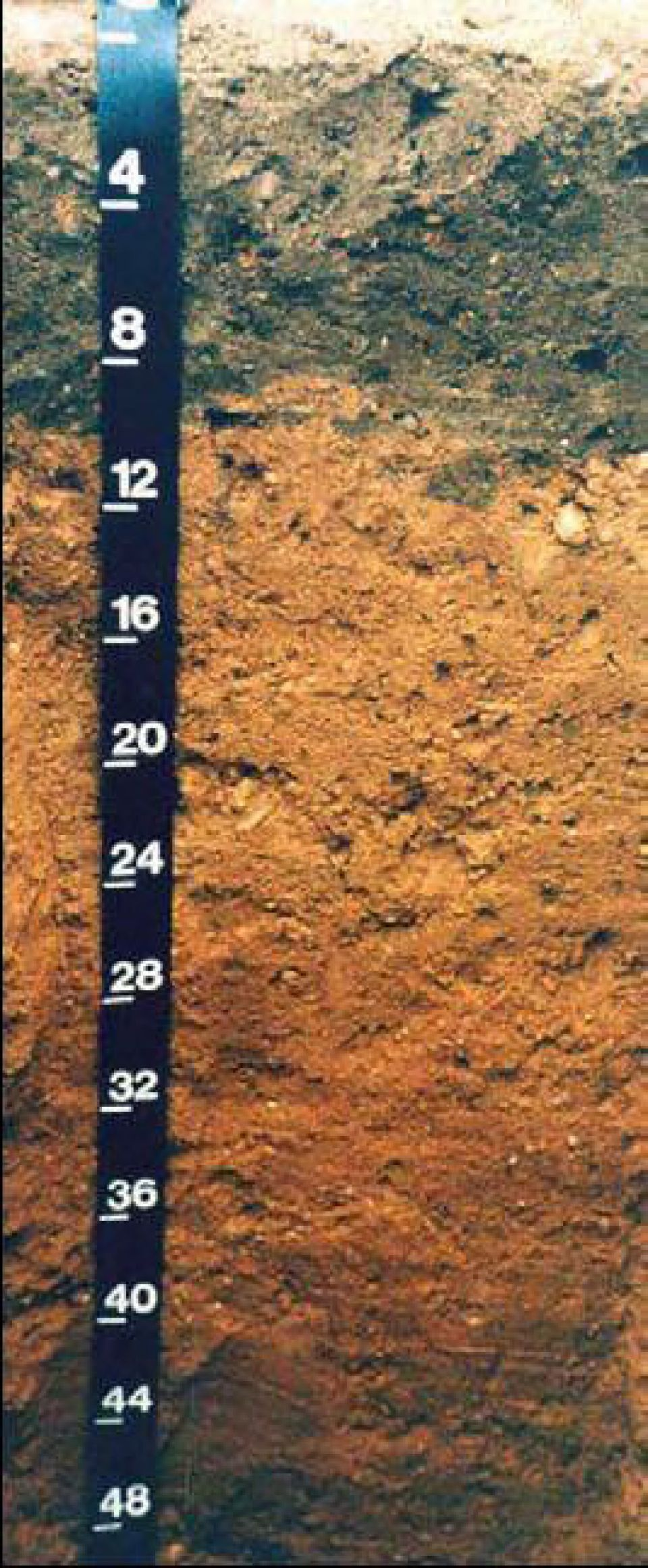 Soil profiles new jersey downer american geosciences for American soil