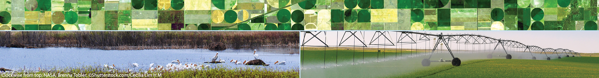 Images of groundwater use for farming and of surface groundwater in Nebraska with resting water birds. B. Tobler/AGI