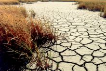 Vegetation showing water stress during a drought. Image Credit: U.S. Geological Survey