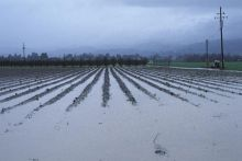 Excess rainfall caused partial flooding of this field near Hollister, California. Image Copyright © Michael Collier http://www.earthscienceworld.org/images