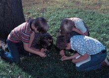 Students studying soils