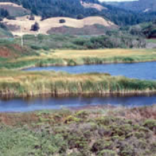 Salt marsh near Pescadero, California