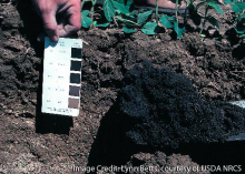 All the soils in Iowa have been surveyed and cataloged as part of the cooperative soil survey. Soil color is one of the items in the soils database people find useful.