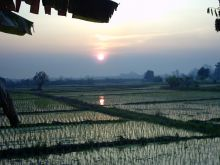 Rice Paddies in Northern Thailand at Sunset.