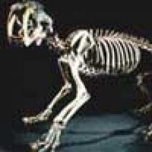 IES Fossils glyp