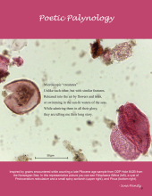 Background image of pollen grains from the Pliocene aged ODP Hole 642B.