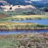 Salt marsh near Pescadero, California