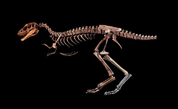 Mini-T. rex fossil found in China